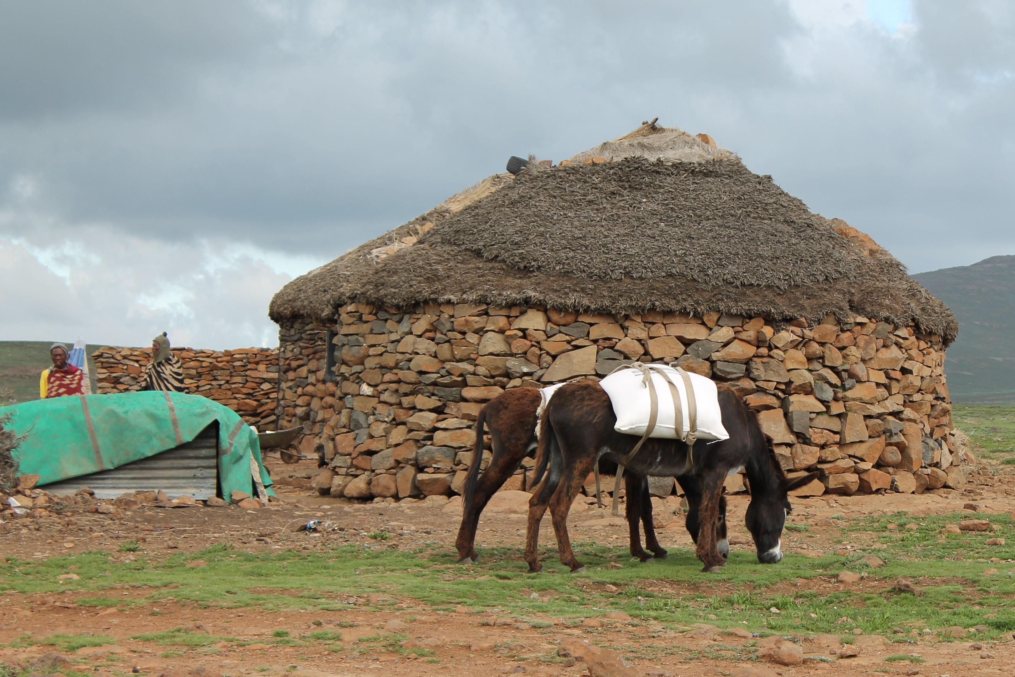 Holy Curiosity-Lesotho